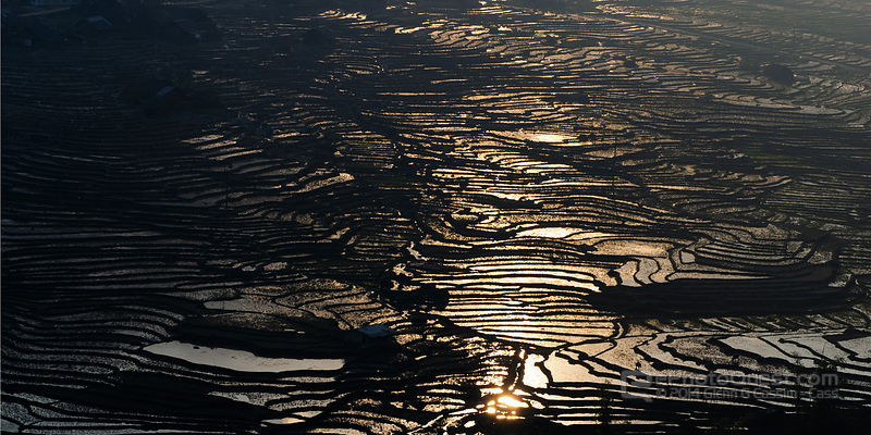 Contrasty Atmospheric Scene of Irrigated Terraced Rice Paddies