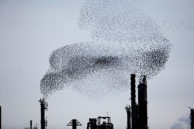 Refinery Flocks 9, 2009
