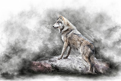 Art-Digital-Alain-Thimmesch-Loup-30