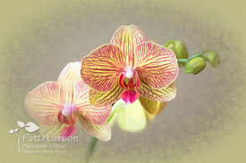 Bright Blooming Orchid