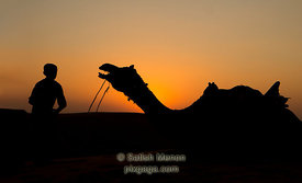 Camel and boy at Sunset, Jaisalmer, Rajasthan, India