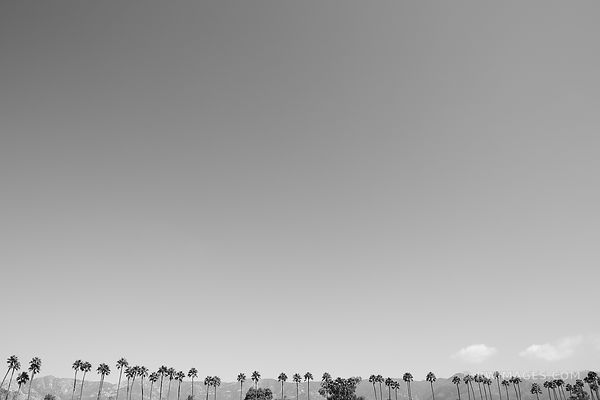 PALM TREES SANTA BARBARA BLACK AND WHITE MINIMALISTIC