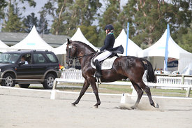 SI_Festival_of_Dressage_310115_Level_6_7_MFS_0624