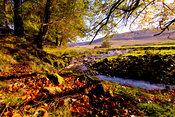 The forest of Bowland, Lancashire