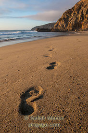 Foot Prints and Hill, McClure's Beach, Point Reyes National Seashore, California, USA (Winning Image, Nature Photographer Magazine Contest, December 2012)