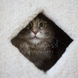 white and grey cat hiding inside cat condo
