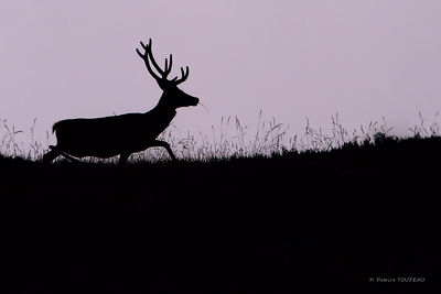 Photos of deers hinds and roe deers in mountain