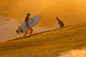 Surf and Kangaroo
