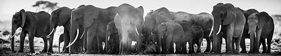 X-Panoramic_of_an_elephants_family_Kenya_201X_Laurent_Baheux