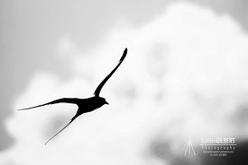 Longtail in Silhouette
