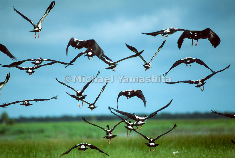 Birds Take Off at Kakadu National Park, Australia