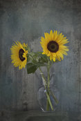 Sunflowers in Glass Vase | Photography Image