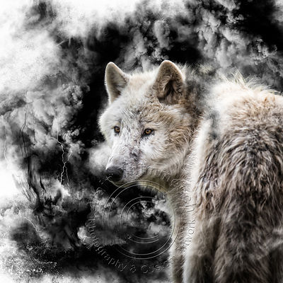 Art-Digital-Alain-Thimmesch-Loup-15