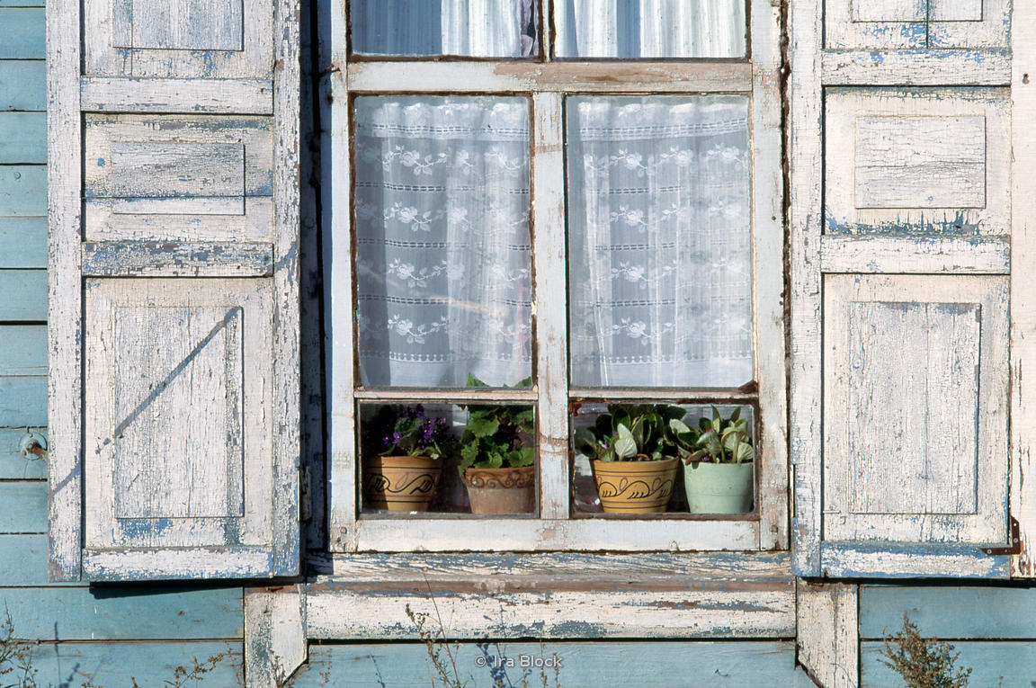 A window with plants in Siberia.