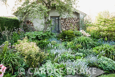 Logs stacked neatly against an outbuilding provide a strking backdrop to beds of forget me nots, Veronica gentianoides, Sorbaria sorbifolia 'Sem', Solomon's Seal (Polygonatum multiflorum) and azaleas. Westbrook House, West Bradley, Somerset, UK