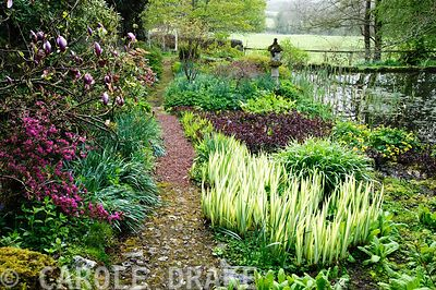 Lower pond with stone temple lantern and planting including Iris pallida 'Aurea Variegata', Lysimachia 'Firecracker', Caltha palustris the marsh  marigold, Lysichiton americanus and Acer palmatum dissectum 'Tamukeyama'. Wayford Manor, Wayford, Crewkerne, Somerset, UK