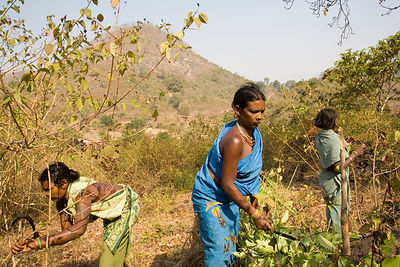 Tribal women search for firewood