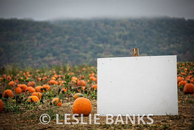 Blank sign in a pumpkin patch