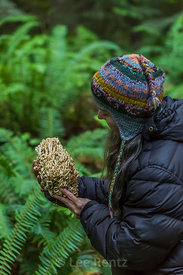 Coral Mushroom in Olympic National Forest