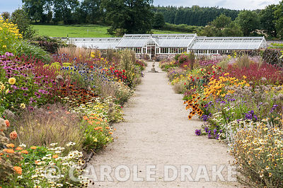 Double herbaceous borders planted with predominantly hot colours lead toward renovated Victorian greenhouses. Key plants include dark red Persicaria amplexicaulis 'Atrosanguinea', Chrysanthemum segetum 'Eastern Star', annual marigolds and rudbecias, dahlias, Echinacea purpurea Bressingham hybrids, tall Rudbeckia laciniata ;Juligold' and blue Echinops ritro. Helmsley Walled Garden, Helmsley, York, North Yorkshire, UK