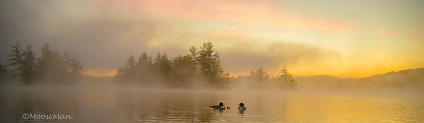 Loon Magic in the Fog