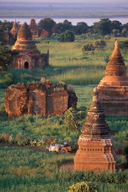Ox-cart & pagodas