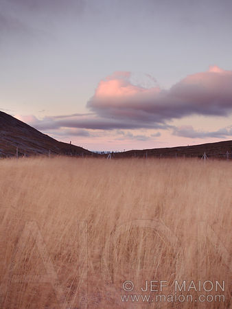 Dry grass field at dusk