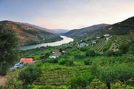 The Douro river and the terraced vineyards of the Port wine near Mesão Frio. A Unesco World Heritage site, Portugal