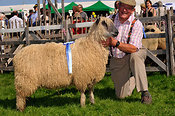 Farmer with Champion Wensleydale sheep at a show.