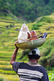 farmer in rice field