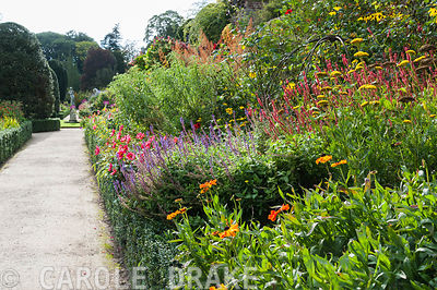 Borders on the lower terrace at Powis Castle garden full of brightly coloured herbaceous perennials including heleniums, persicarias, Salvia nemorosa 'Lubecca' and achilleas