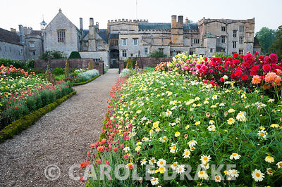 Path running through the kitchen garden is framed with dahlias and argyranthemums. Forde Abbey, nr Chard, Dorset, UK