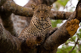 Wildlife of Serengeti
