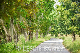 Tree lined footpath