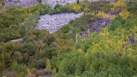 Medium Shot: Slow Dolly Shot Of Fall Colors Changing On A Mountain Slope