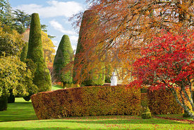 Soft autumn light picks up statue from behind circular beech hedge and maple