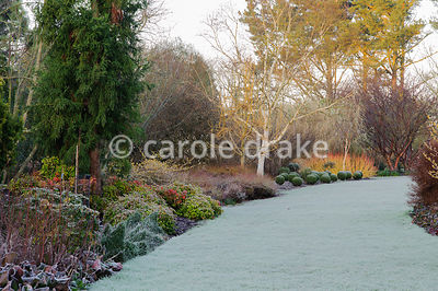 Winter garden includes evergreens such as Euonymus minimus and clipped box, colourful stems such as Cornus sanguinea 'Midwinter Fire' and birches.  Sir Harold Hillier Gardens, Ampfield, Romsey, Hants, UK