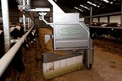 Robot feeding cattle in dairy shed.