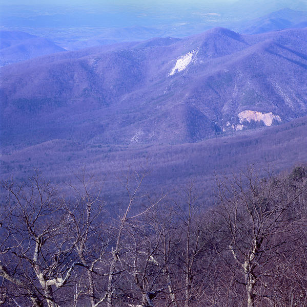 022-Blue_Ridge_D145187_Blue_Ridge_Early_Spring_Tree_Detail_002_Preview