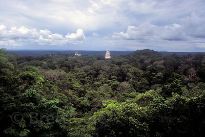 Temples rising above the rainforest canopy, Tikal, Guatemala