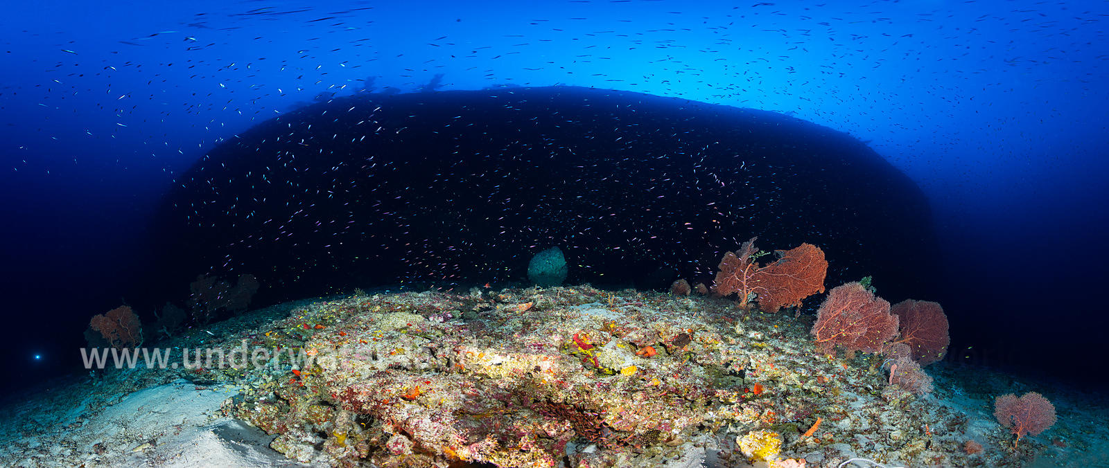 Panoramic view at 85 meters depth