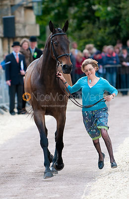 First Inspection (Trot Up) photos