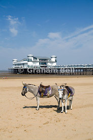 Donkeys on beach, with the Grand Pier in the distance, Weston Super Mare, Somerset, England