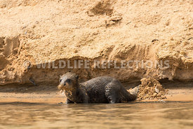giant_otter_sand_slide-4