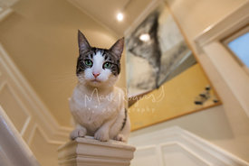 Domestic shorthair cat with painting on stair rail