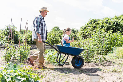 Grandfather pushing wheelbarrow with granddaughter in the garden