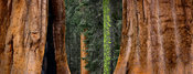 Tree trunks patterns