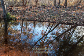 Trees and reflection, Oak Creek, Yavapai County, Sedona, Arizona, USA