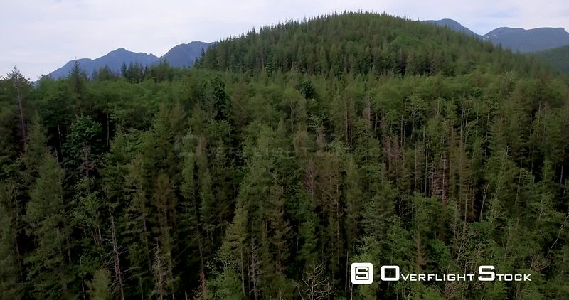 Rising shot over a beautifully forested hill to reveal mountains and clearcuts