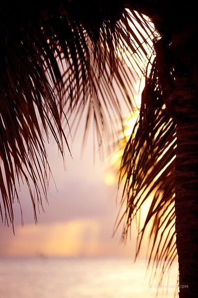 Photos prints key west florida keys photography for Photography prints to buy